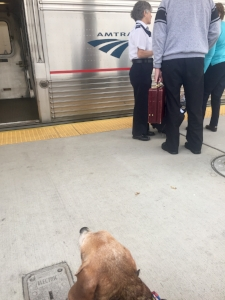 Guest Post: Dogcation, Taking the Train with My Dog to Key West