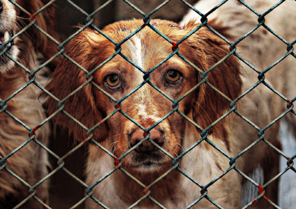 How You Can Help Animals Without Adopting