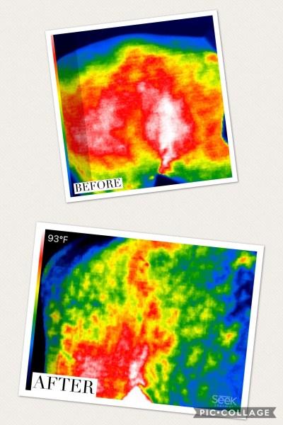 Thermal Imaging Horse