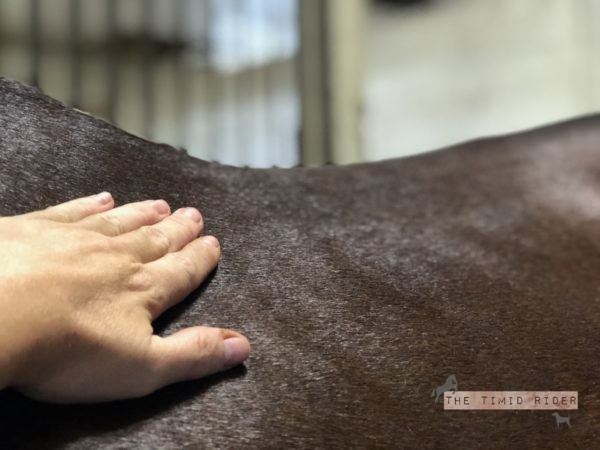 Equine Sports Massage by Heather Wallace