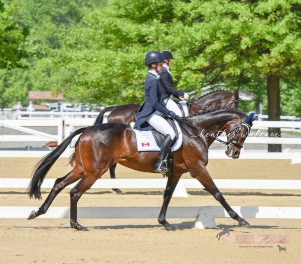 Dancing Dressage Horse