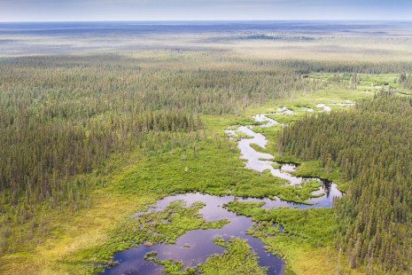Aerial photo of boreal forest and stream in Ontario's Far North