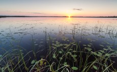 Far North sunset and lily pads