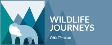 Wildlife Journeys with Tim Irvin logo