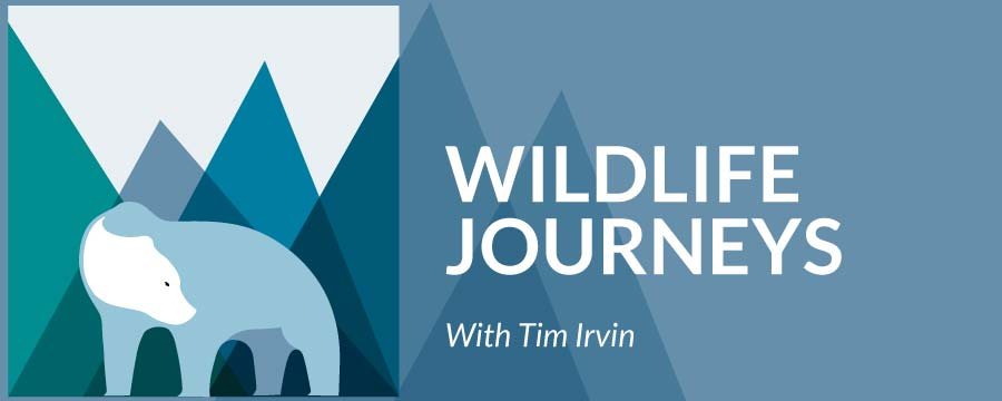 Wildlife Journeys with Tim Irvin logo