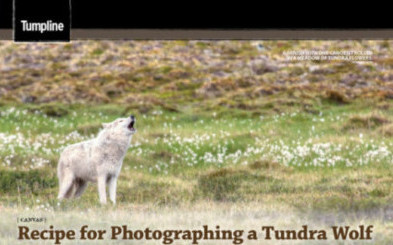 Recipe for a wolf photograph