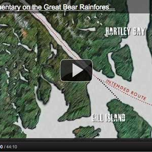 Cover image for youtube video on the Great Bear Rainforest