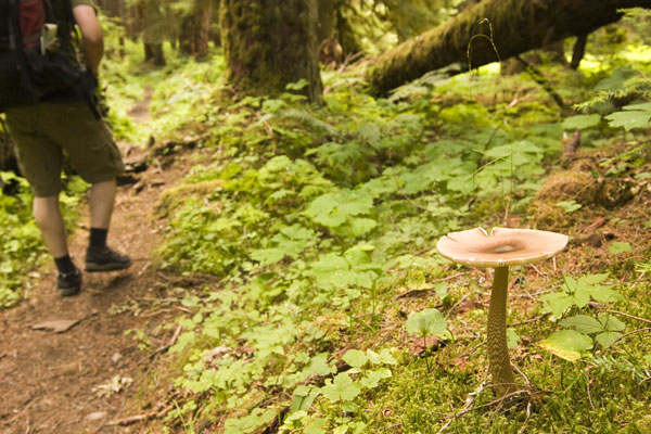 Hiking Olympic National Park