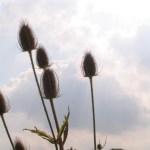 Blumenstengel