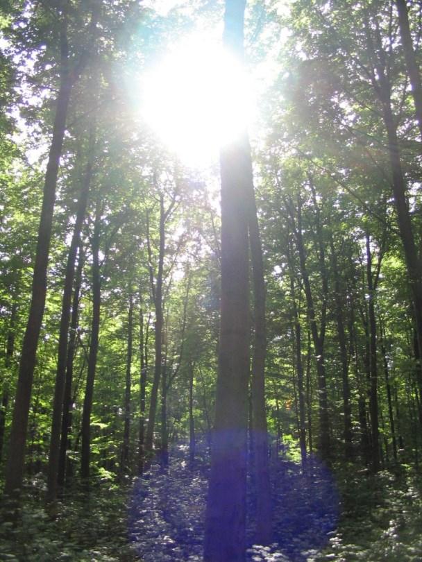 Die Sonne bricht in Baumwipfeln