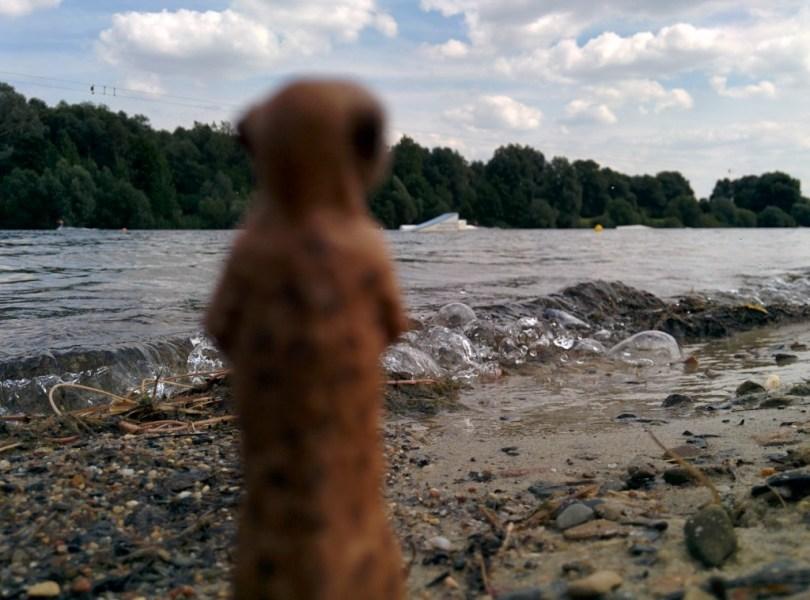 Erdmännchen am Salzgitter See