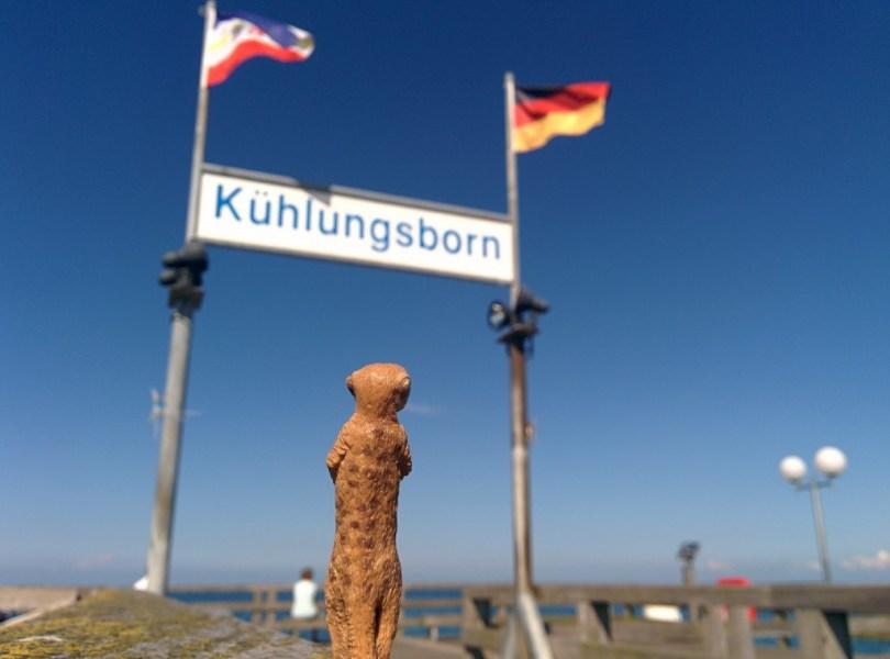 """Erdmännchen unter dem Schild """"Kühlungsborn"""""""