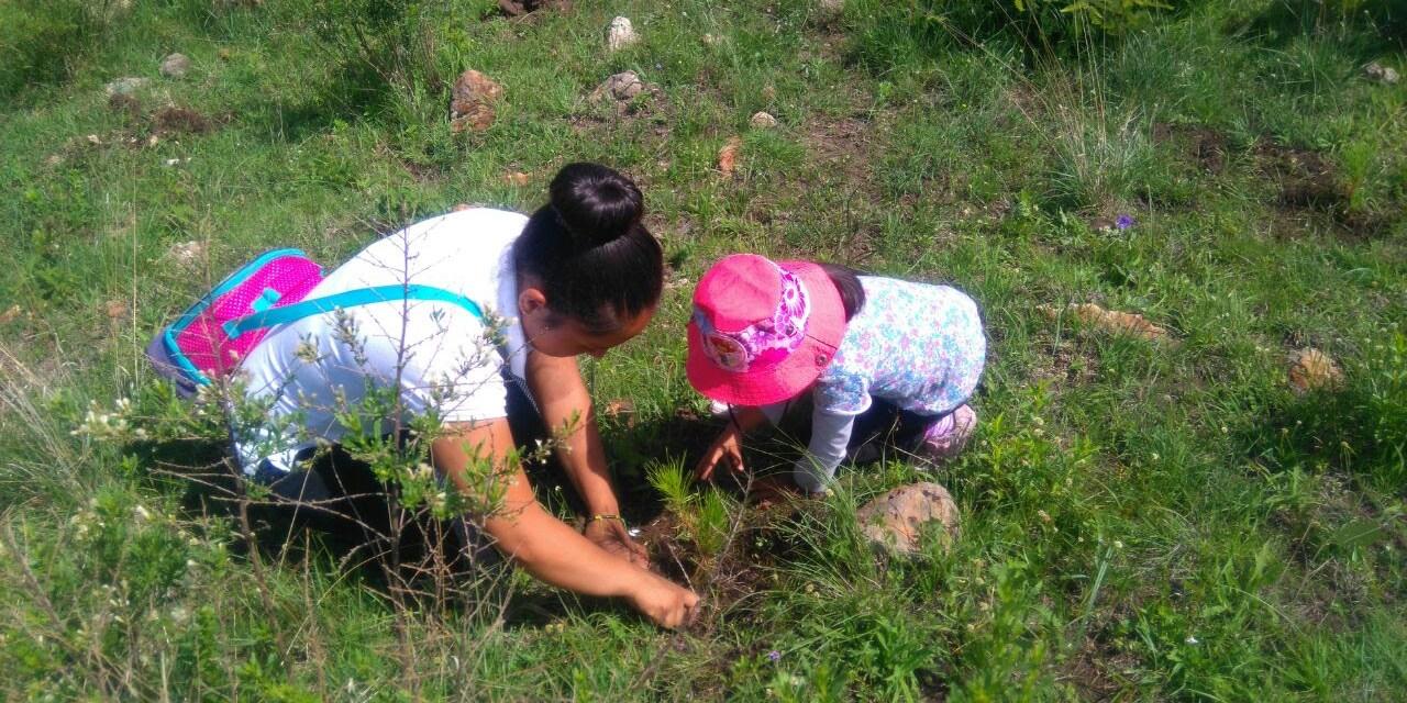 Este sábado, histórica jornada de reforestación en Cuanajo, anuncia Cofom