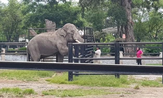 Conmemora Parque Zoológico de Morelia Día Internacional del Guarda Animal