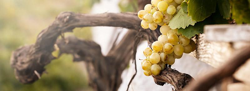 vino-biologico-2