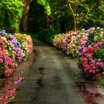 Flower Lined Path - Nature Trail - Paved Trail - Spring Flowers