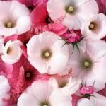 Love Romance pink flowers