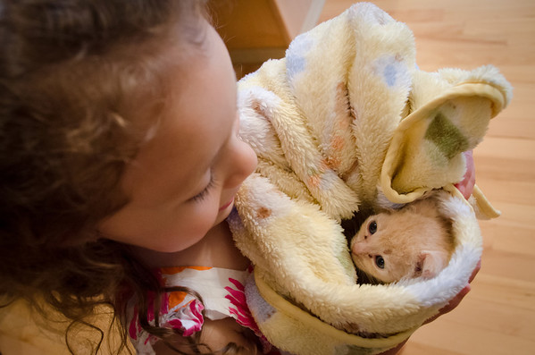 Little Kitty in a blanket