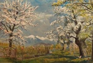 Apple blossom, Brixen
