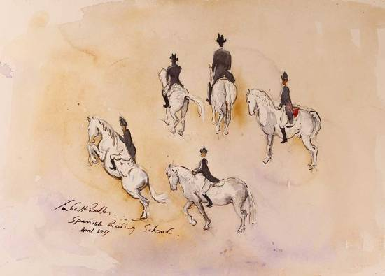Spanish Riding School Horse Sketches