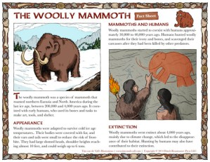 Woolly Mammoth Handout