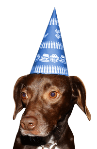 Birthday Party Hat Dog