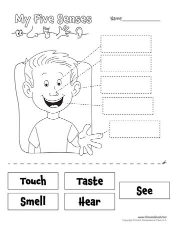 5 senses worksheet