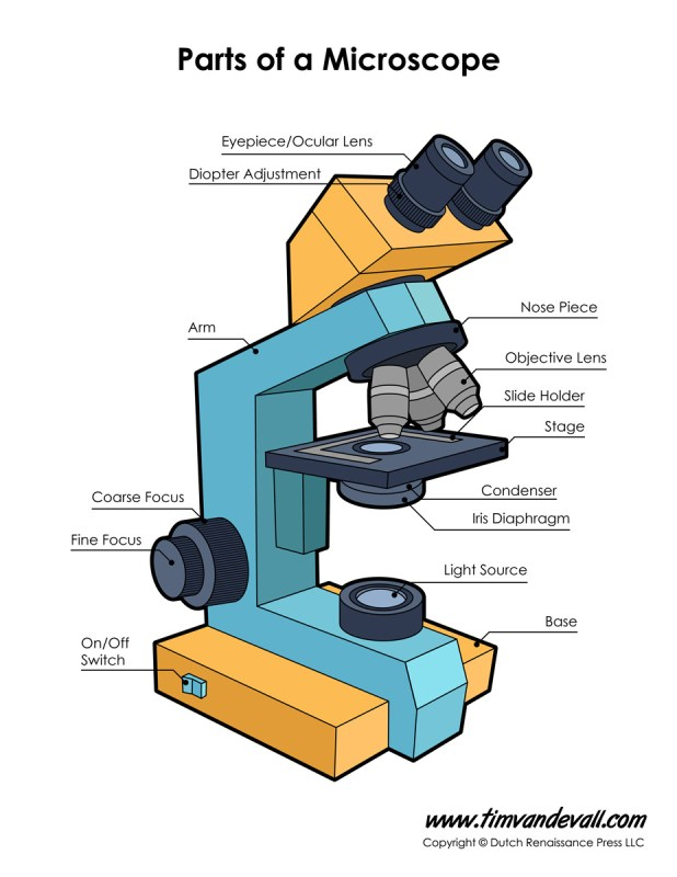 Microscope Diagram Labeled, Unlabeled and Blank   Parts of ...
