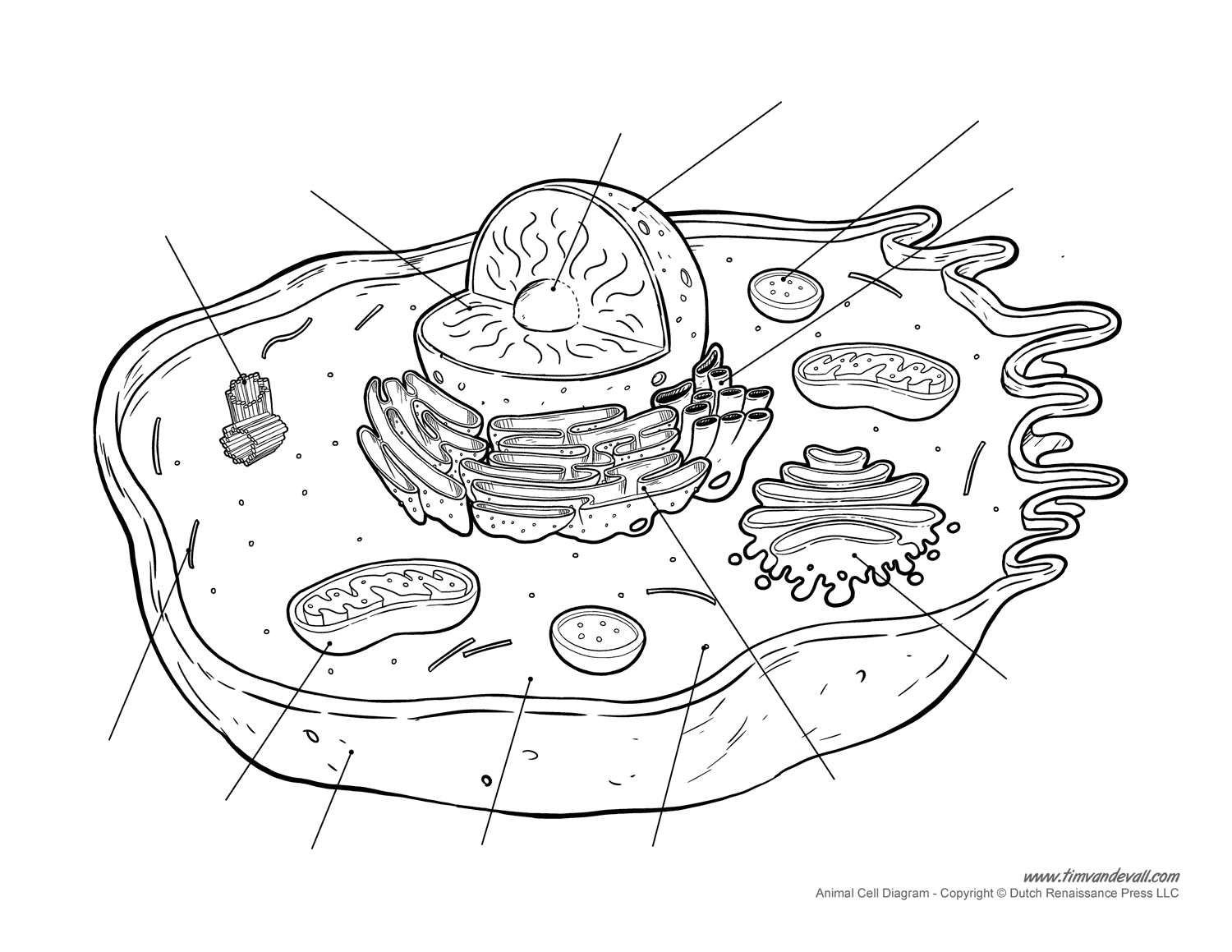 animal-cell-diagram-unlabeled - Tim's Printables
