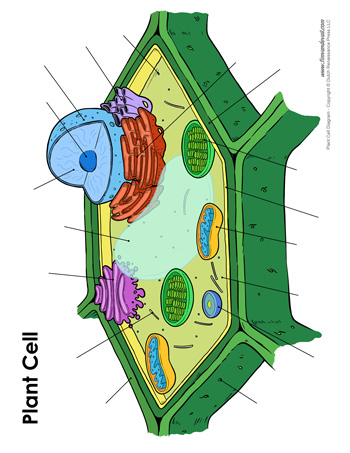 blank plant cell diagram 350?fit\=350%2C453\&ssl\=1 plant cell diagram unlabeled wiring database library