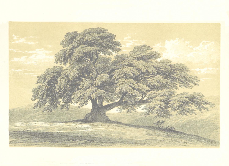 Free Family Tree Template Printable