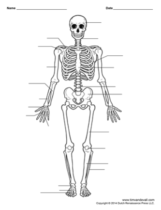 human skeleton worksheet