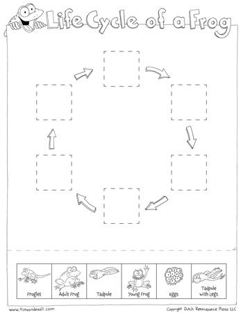 printable life cycle of a frog worksheet