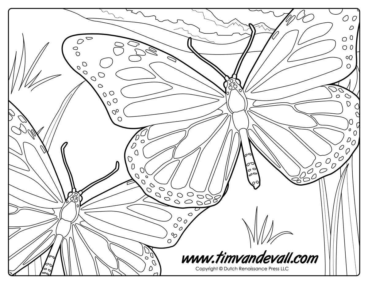 Monarch Butterfly Coloring Page