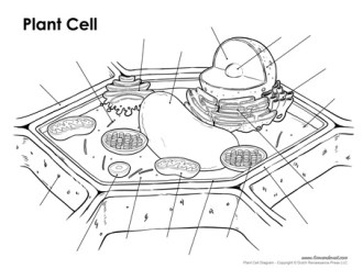 Printable Plant Cell Diagram Labeled Unlabeled And Blank