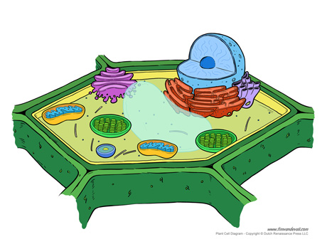 plant cell diagram worksheet