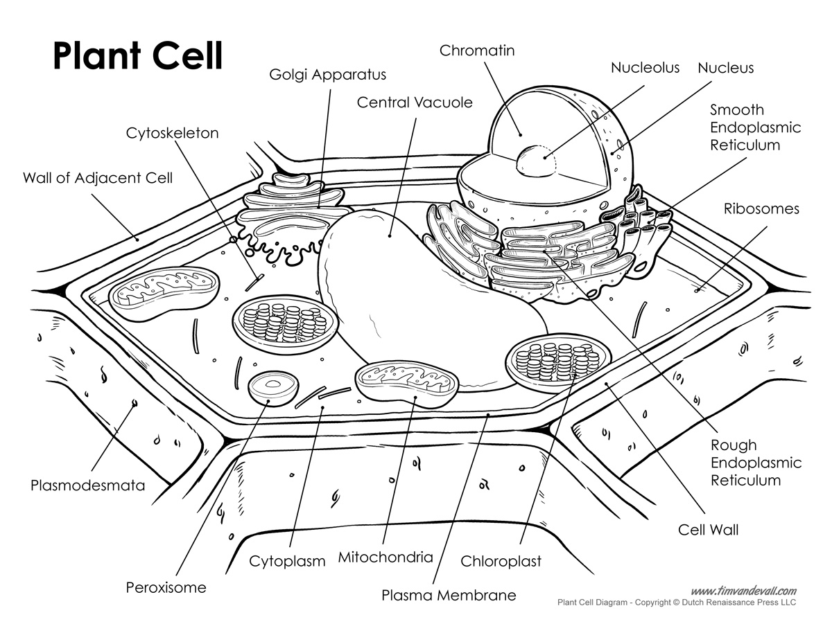 Blank Plant Cell Worksheet Worksheets Ratchasima
