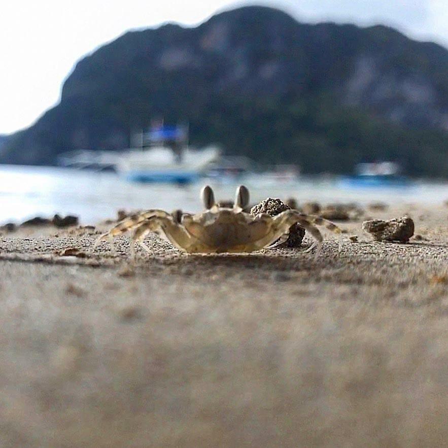 El-Nido-Beach-Crab