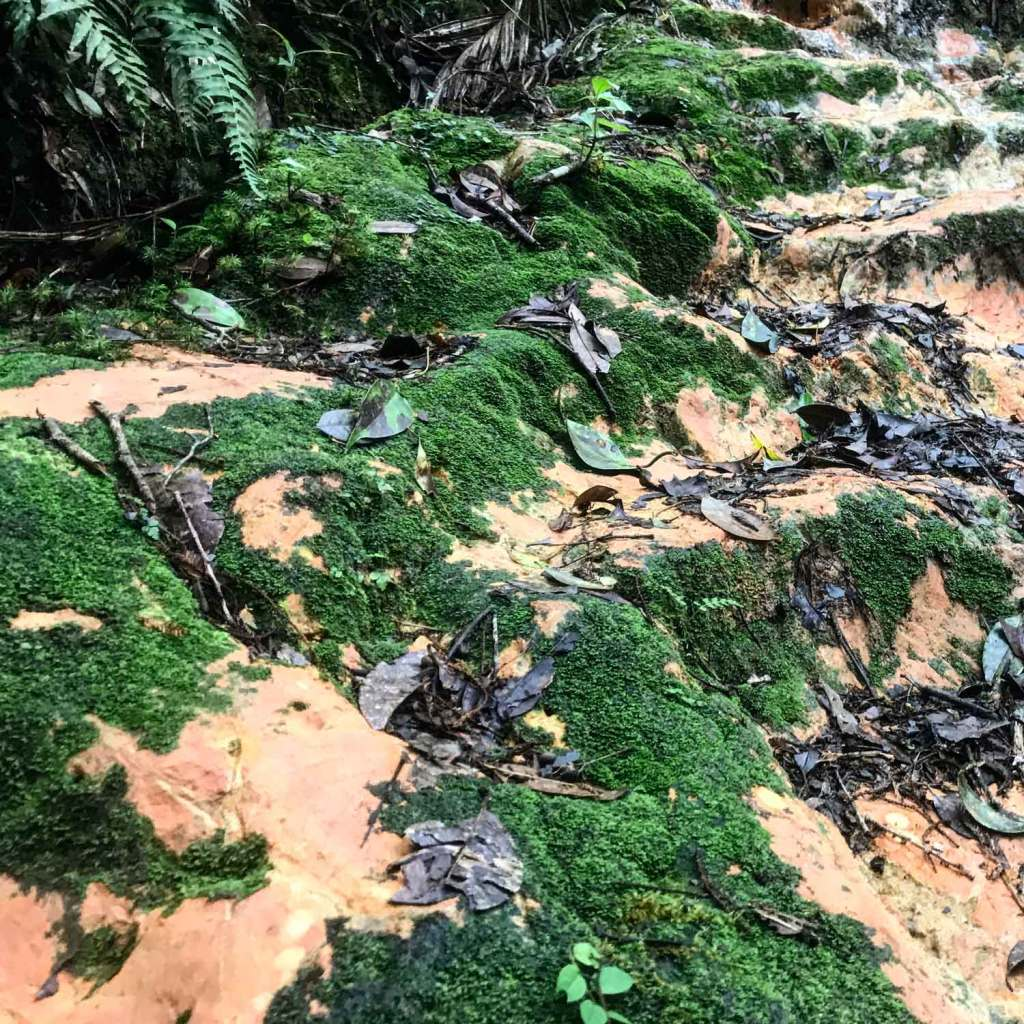 Kota-Kinabalu-Taman-Moss