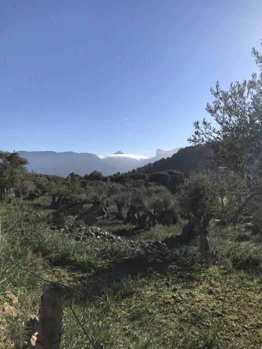 Mallorcavandring