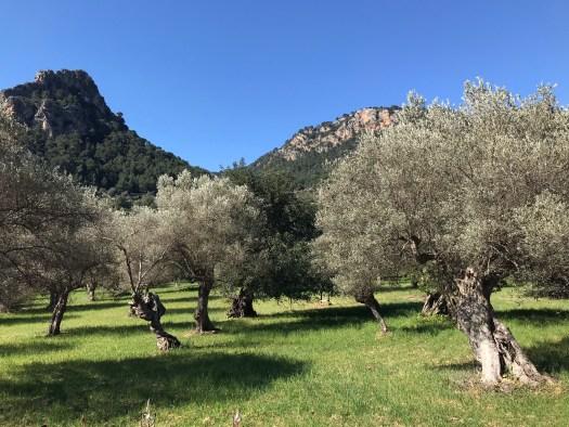 Mallorca i april