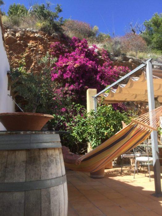 Mallorcaväxter i Coronatider