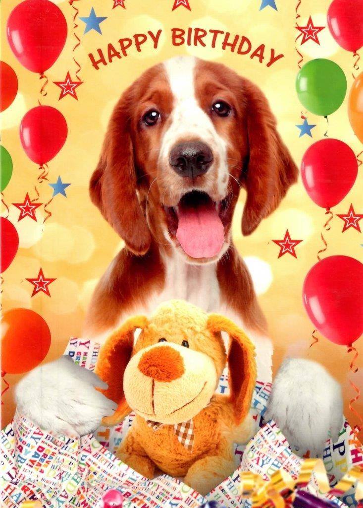 cute dog happy birthday greeting card cards