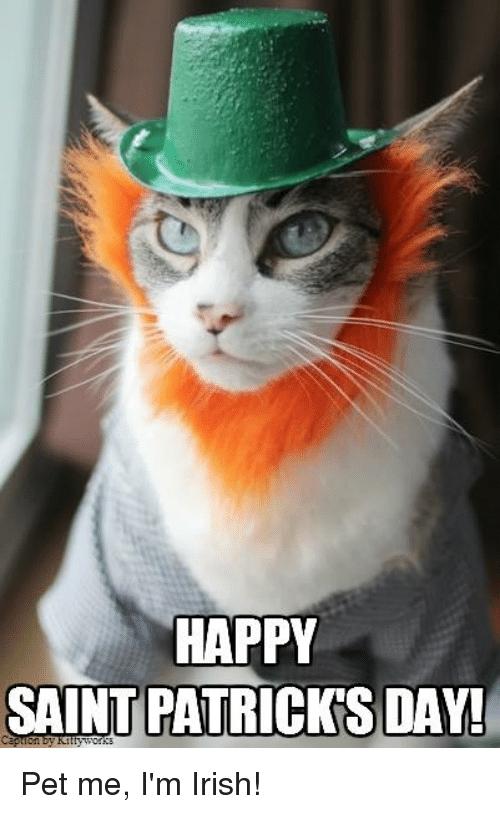 happy saint patricks day pet me im irish meme on sizzle