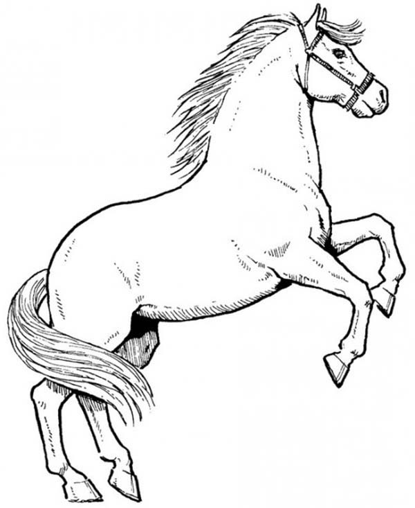 awesome male horse in horses coloring page download