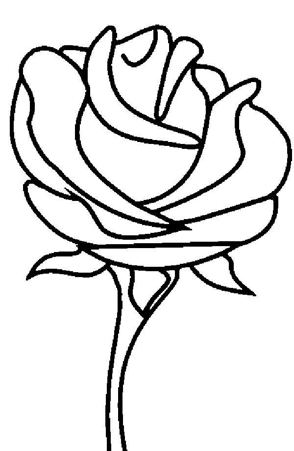 beautiful Roses image