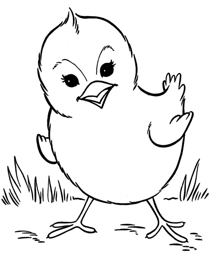 Chick Colouring Sheets
