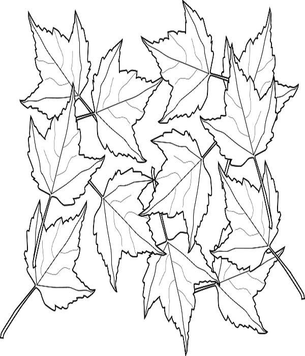 free autumn or fall leaves coloring pages for education