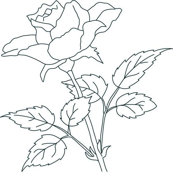 Free Rose Coloring Pages