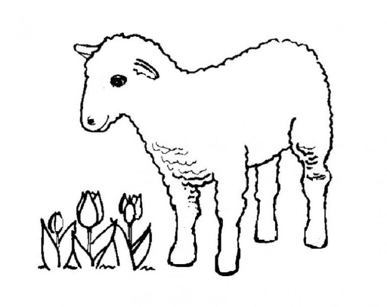 lamb coloring sheets to print free downloads